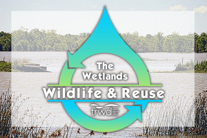 Wetlands Wildlife & Reuse | TRWD