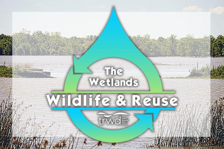 Wetlands Wildlife & Reuse | TRWD