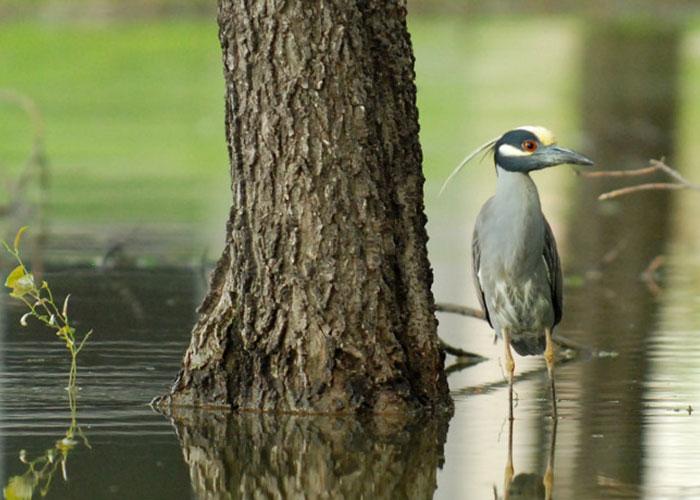 Heron | TRWD