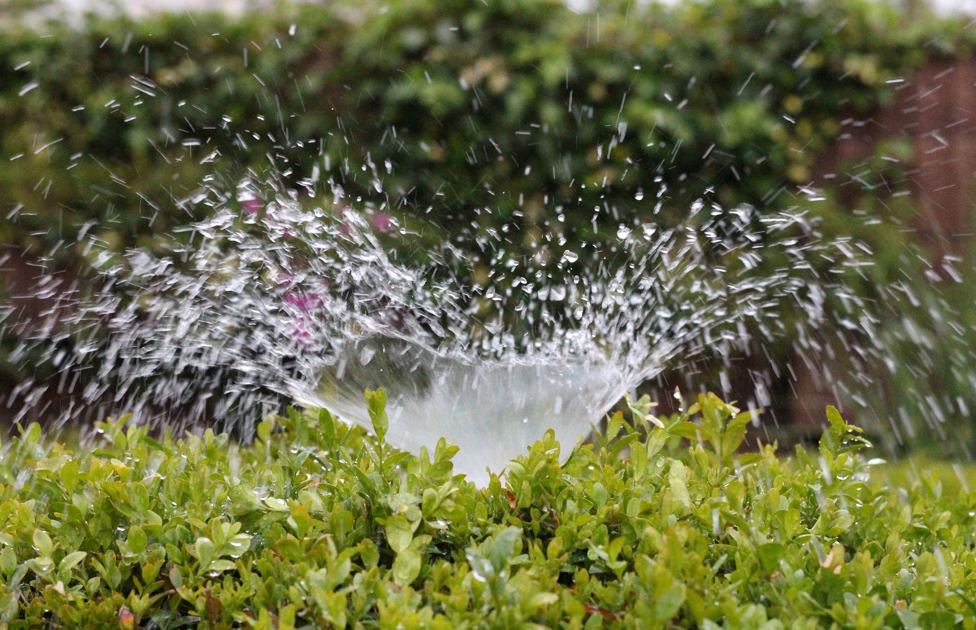 What are your sprinklers doing while you sleep?